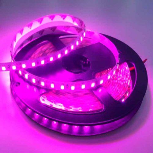 Tira LED Rosa-Violeta 14,4 W/m 12V IP20 5 metros